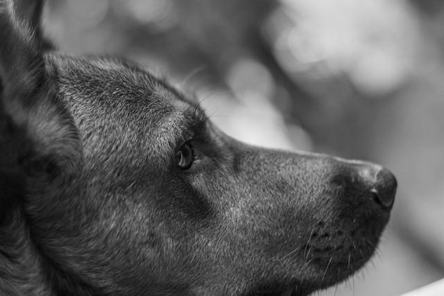 40-letniemu mężczyźnie grozi kilka lat więzienia za bestialskie zabicie psa.