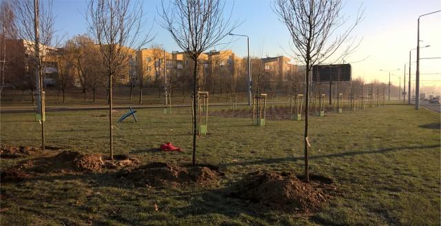 W ostatnim czasie miasto zasadziło nowe drzewa m.in. wzdłuż ulic Filaretów i Jana Pawła II