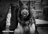 Odszedł pies Homar. Owczarek w gubińskiej policji służył przez 10 lat