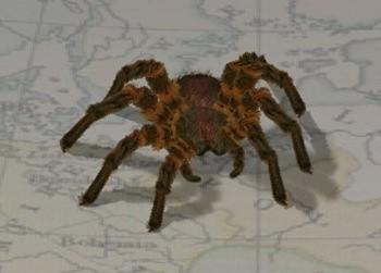 Co czwarta osoba cierpi na fobię. Można się bać wszystkiego: pająka, czy też ścinania włosów...