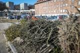W Gdańsku wycięto ponad dwadzieścia chorych drzew. Stwarzały zagrożenie dla pieszych