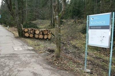 Wycinka drzew była w zeszłym roku prowadzona między innymi w tłumnie odwiedzanych przez turystów Kuźnicach Fot. LK
