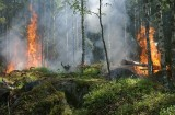 """Rozpoczął się """"sezon pożarowy"""" w lasach. Jak nadleśnictwa zabezpieczają się przed ogniem?"""