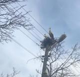 Do Stefanowa przyleciały bociany. Ptaki porządkują gniazdo i szykują się do lęgu