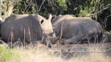 Praca w rezerwacie przyrody. Jak zostać wolontariuszem w Afryce?