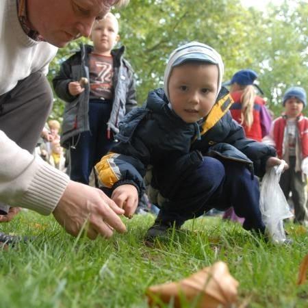 Kilka cebulek żonkili zasadził wczoraj czteroletni Maksymilian Chaszczak. Tylko nieznacznie pomagali mu dorośli.