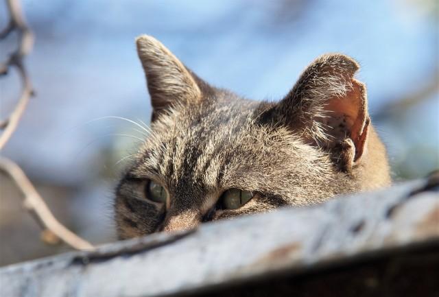 Dołączając się do akcji Ratuj!, pomagamy zabezpieczyć koty i psy będące pod opieką schronisk i fundacji (także tych w Inowrocławiu) przez kleszczami i niesionymi przez nie chorobami