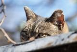 Inowrocław. Pomóżmy zabezpieczyć zwierzaki ze schronisk i fundacji przed kleszczami i przenoszonymi przez nie groźnymi chorobami
