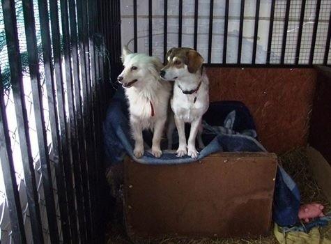 Chmurka i Tedi mogą już spokojnie czekać w Przystanku na nowy dom