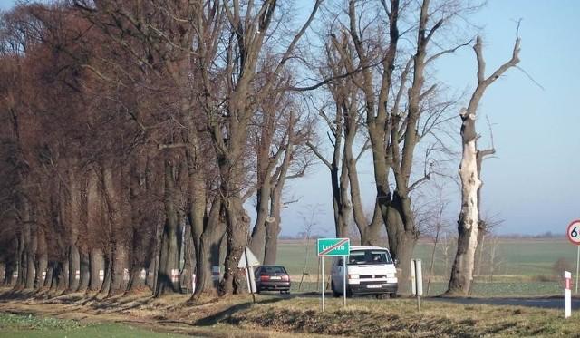 Nawet 20 mln zł może kosztować nowa droga, która ma ominąć aleją lipową w Lubrzy.
