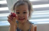 Dzieci z kazimierskiego żłobka poznawały owoce lata. Niekwestionowaną królową była tego dnia smakowita truskawka [ZDJĘCIA]