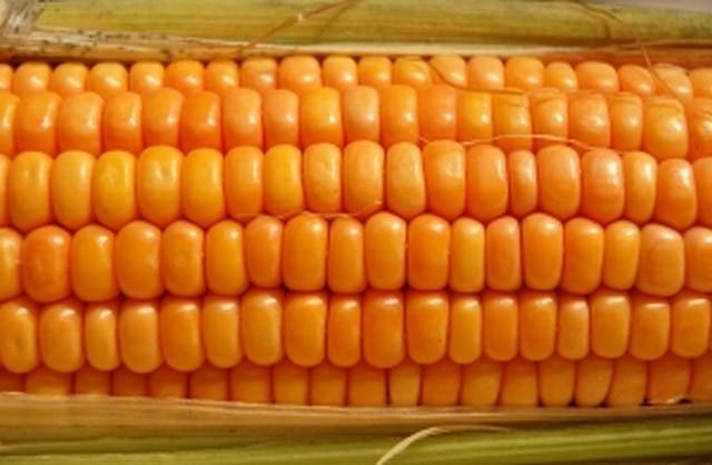 Po zażyciu trucizny często nie od razu widać efekty. Tak samo może być z GMO. Dlatego musimy mieć wybór - uważają konsumenci/-ki.