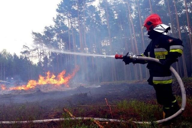 W akcji gaśniczej w Paterku wzięło udział 80 strażaków