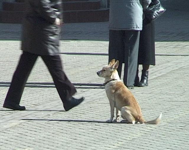 Wszystko wskazuje na to, że psy wałęsające się po gminie Węgorzyno mają szczęście. Idzie zima, a w schronisku czeka na nie miska ciepłej strawy, ogrzewany boks i dach nad łbem.