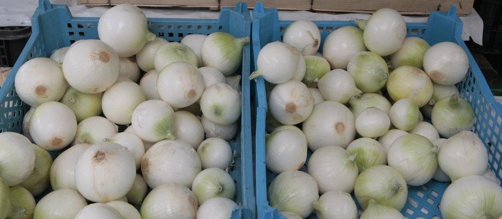 3f82b6a40b14e0 Ceny cebuli w tym roku już są wyjątkowo wysokie. A będą jeszcze ...