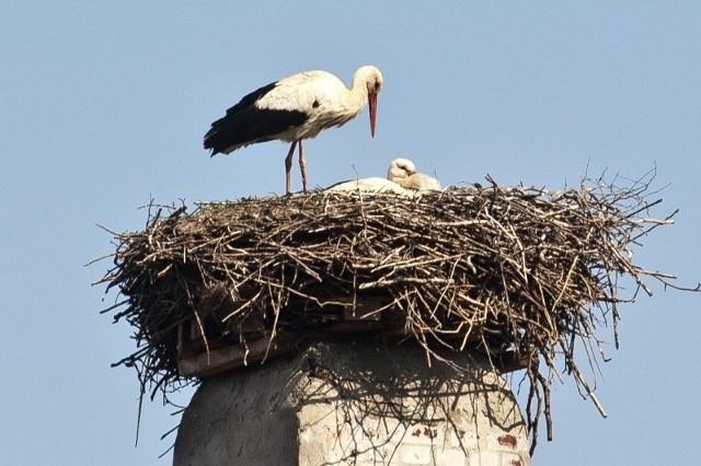 - Bocian jest gatunkiem chronionym - argumentują. - Sądziliśmy, że działacze zainteresują się losem ptaków