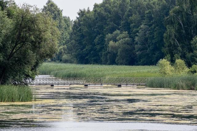 Radny miejski Henry Dębowski złożył w poniedziałek (2.08) interpelację do prezydenta Białegostoku w sprawie oczyszczenia zbiornika wodnego na plaży w Dojlidach. Na jakość wody w akwenie narzekają także mieszkańcy miasta.