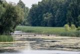 Radny miejski Henryk Dębowski złożył interpelację do prezydenta Białegostoku. Domaga się oczyszczenia zbiornika wodnego na plaży w Dojlidach