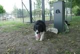 Na osiedlu Kopernika w Poznaniu otwarto nowy wybieg dla psów. To już czternasty taki obiekt w mieście