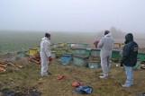 Groźna choroba pszczół dotarła do Wielkopolski