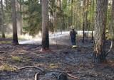 Nadleśnictwo Szczebra. Susza nie odpuszcza. Kolejny pożar lasu w regionie (zdjęcia)