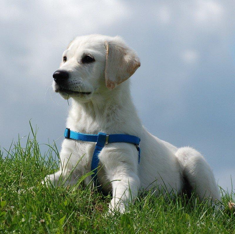 Nowoczesna architektura Sprawdź, czy twój pies nosi popularne imię | Gazeta Lubuska NU86