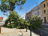 Lublin: Złamane drzewo leży na drodze. Utrudnienia w ruchu obok Bramy Krakowskiej