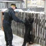 Straż miejska uratowała psa. Mógł zginąć straszną śmiercią.
