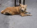 Kuźnica Białostocka. Bezdomne psy wałęsają się wokół dworca i sklepu