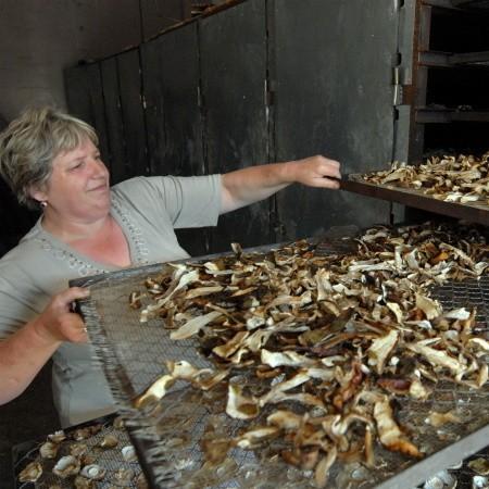- Mamy ususzonych kilkadziesiąt palet grzybów. Wszystko gotowe jest na sprzedaż - pokazuje Kazimiera Trzebniak z punktu skupu runa leśnego w Żytowaniu.