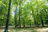 Park Konstytucji 3 Maja i Park Lubomirskich w Białymstoku. Miasto ogłosiło przetarg na dokumentację. Społecznicy boją się wycinek (zdjęcia)