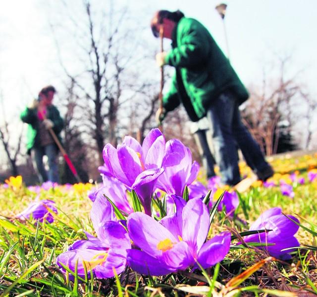 Do wczoraj trwało pozimowe sprzątanie parków i skwerów