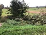 Silny wiatr w województwie podlaskim. Strażacy usuwali powalone drzewa