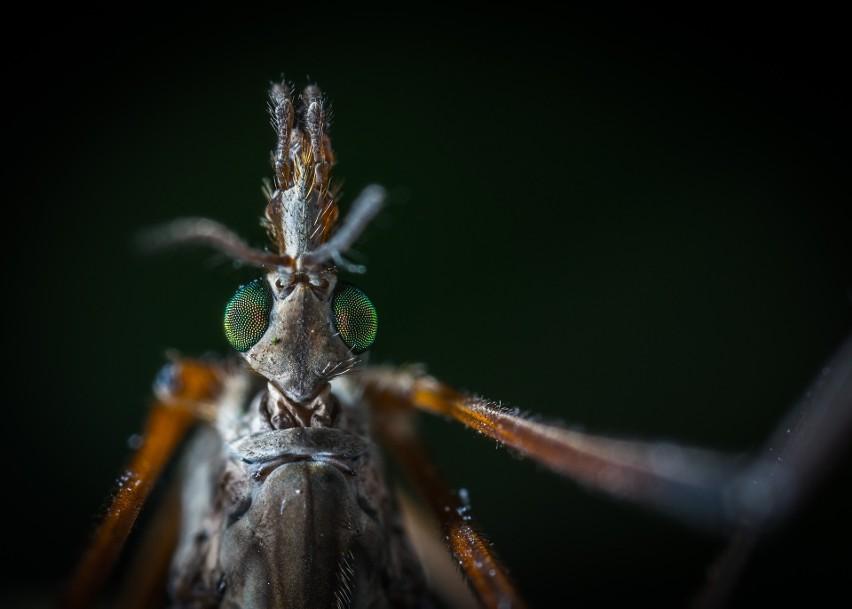 Komary, meszki i pszczoły są utrapieniem podczas...