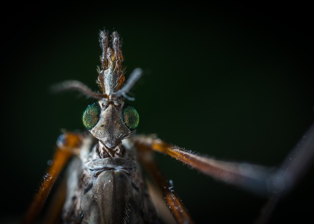 Komary, meszki i pszczoły są utrapieniem podczas cieplejszych miesięcy. Ich ugryzieniom często towarzyszą obrzęk i uporczywe swędzenie. W niektórych przypadkach ugryzienia owadów mogą powodować alergie i wstrząs anafilaktyczny. Duszności, silny świąt, pokrzywka, wymioty, zawroty głowy, a nawet zaburzenia mowy i świszczący oddech - na te objawy powinniśmy zwrócić uwagę i natychmiast sprowadzić pomoc.>>O tym, jak sobie poradzić z ukąszeniami owadów przeczytacie na kolejnych slajdach