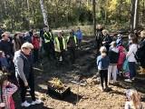 150 osób posadziło pięć tysięcy drzew w gminie Pierzchnica