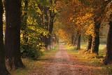 Pogoda na weekend 23-25 października 2020 dla Poznania i Wielkopolski. Będzie ciepło i słonecznie czy deszczowo? Sprawdź prognozę