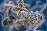 Bestia ze wschodu powraca. Pogoda na koniec stycznia z silnym mrozem. To koniec odwilży. Temperatura może spaść do -30 st C