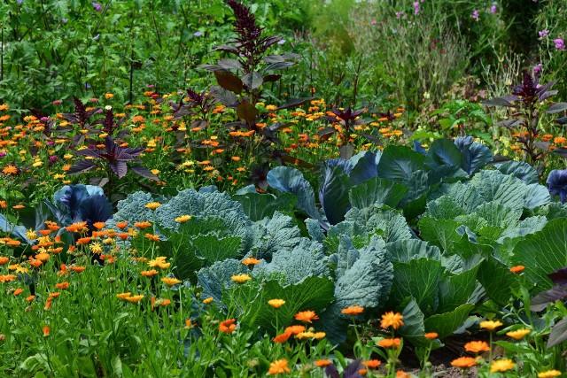 Ogród w sierpniuSierpień to miesiąc zbiorów, ale jest też trochę warzyw, które warto wysiać właśnie teraz, by cieszyć się nimi jeszcze jesienią.