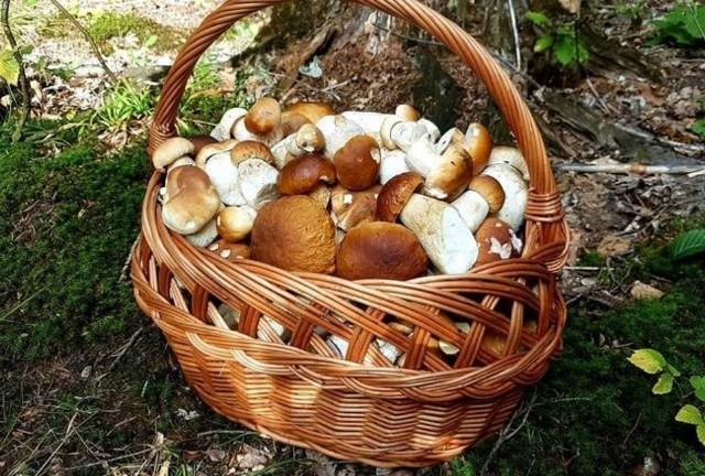 Maślaki, podgrzybki, kanie! Kosze pełne grzybów po zbiorach w łódzkich lasach. We wrześniu są już grzyby. Zobacz co znaleźli grzybiarze. Coraz więcej osób chwali się znalezionymi okazami, a co niektórzy nawet pełnymi koszyczkami. Nie pozostaje więc nic innego, jak po prostu udać się do lasu na poszukiwania. Zachęci was do tego nasza grzybowa galeria. Zobaczcie.Zobacz na kolejnych slajdach