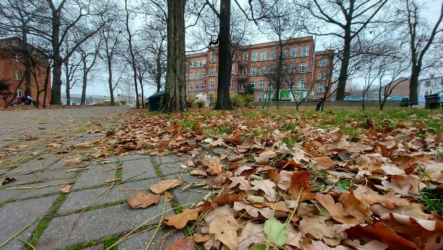 Ciało kobiety znaleziono w parku na Placu Kolejarza w Zielonej Górze