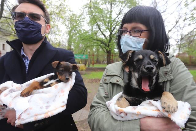 Jacek i Placek, dwa szczeniaki porzucone w lesie, tymczasowy dom znalazły w schronisku. W przyszłości też powinny być wykastrowane.