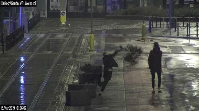 Mężczyzna wyrwał i powyrzucał krzewy z donicy znajdującej się na ul. 27 grudnia. Zobacz więcej ----->
