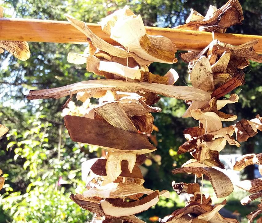Suszenie grzybów nawleczonych na nici...