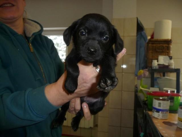 Pies poz. 21/0082Szczeniak oddany 1 lutego.Zobacz też:Najpopularniejsze zwierzęta domowe w JaponiiNajmądrzejsze rasy psów