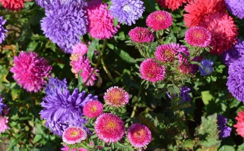 Wrzesień Czas Sadzenia I Przesadzania Kwiatów Nowa