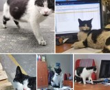 W Bydgoszczy zaginęła kotka. Małe kociaki zostały same