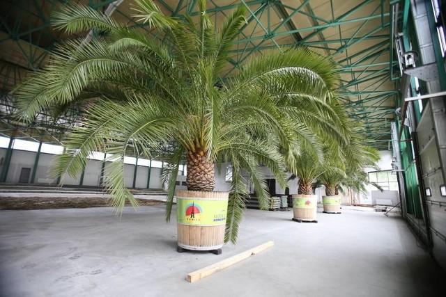 Hala Jantor II w Katowicach. To tu przechowywane są palmy z rynku