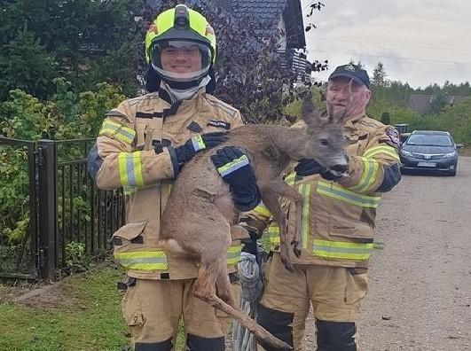 Strażacy ochotnicy uratowali sarnę, która utknęła w przydomowej bramie