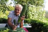 Ogromne warzywa pana Ryszarda, łódzkiego działkowca z ROD Księży Młyn